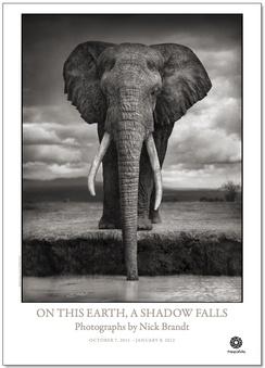 Affisch Nick Brandt 77