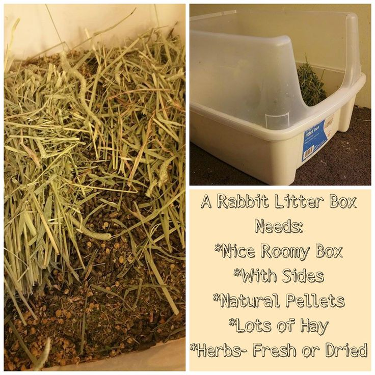 Litter box training. A blog about Natural chicken and rabbit care on a small backyard farm called Happy Days Farm
