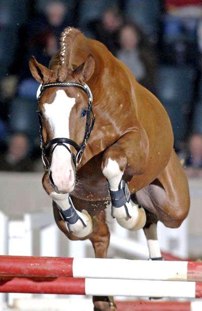 Show Horse Gallery - Providence, Hanoverian