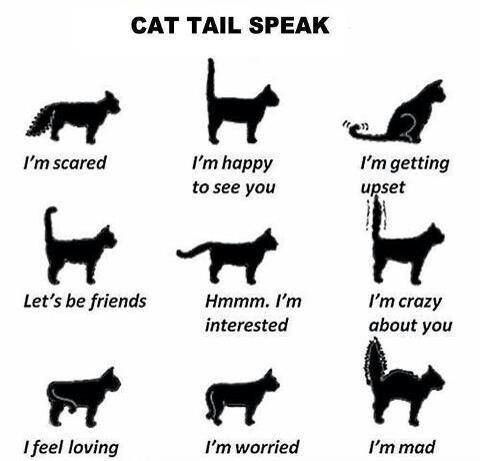 """Cat Tail Speak — Go Freak Out Your Friends And Tell Them You Can Read Cats' Minds… """"don't Do That."""" """"why"""" """"your Cat Doesn't Like It. He's Pissed."""" """"…….how Do You Know"""""""