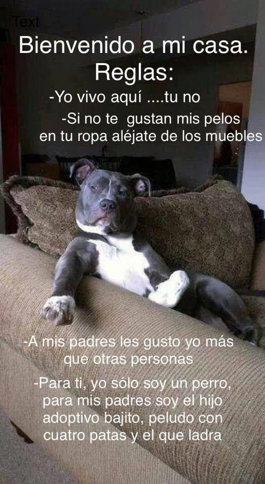 Pin De Cristina Flores En Imagenes Varias Perros Graciosos Perros Perros Frases