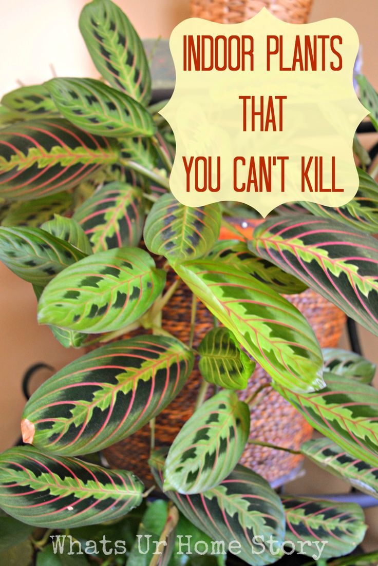 13 best images about houseplants on pinterest gardens for Easy to grow indoor plants