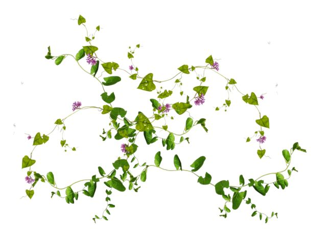 10 Free Plants Flowers Png Images At Dzzyn Com Vine Leaves For Online Imagesinterior Renderingthe