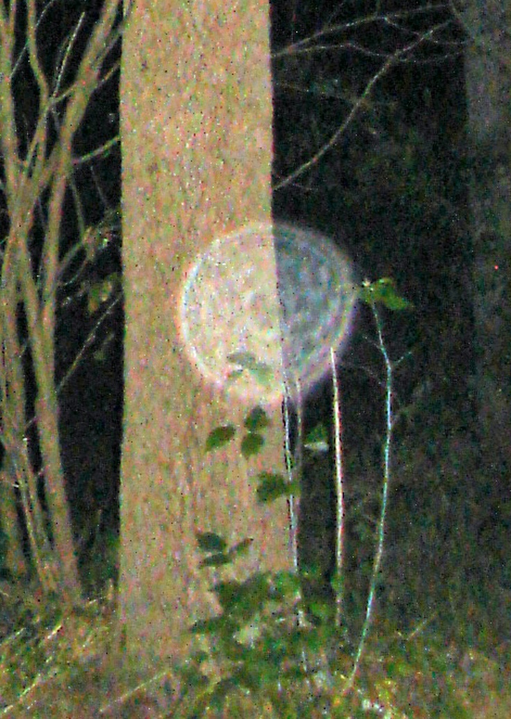 Orb in woods by Joanne Harper