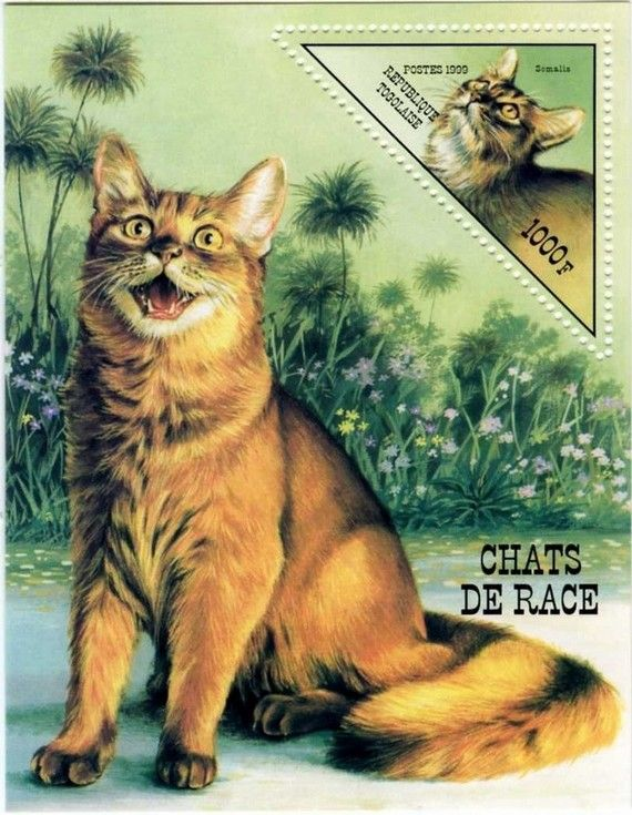 Postage stamp - Togo, 1999 (Pedigree cats: Somali)