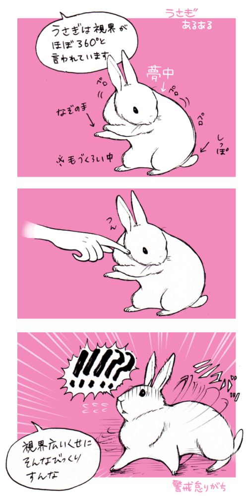 井口病院 うさぎ - Google 検索 **** Not a word of English, but if you have a bunny you know EXACTLY what this is about. Lol. DP