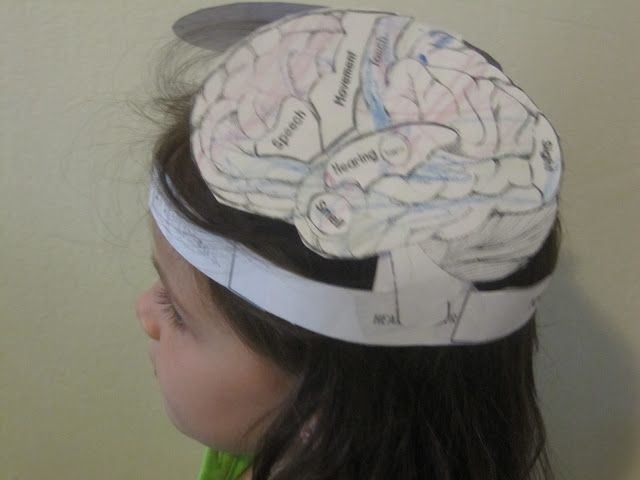 Human body crafts we found this brain hat template for Brain hat template