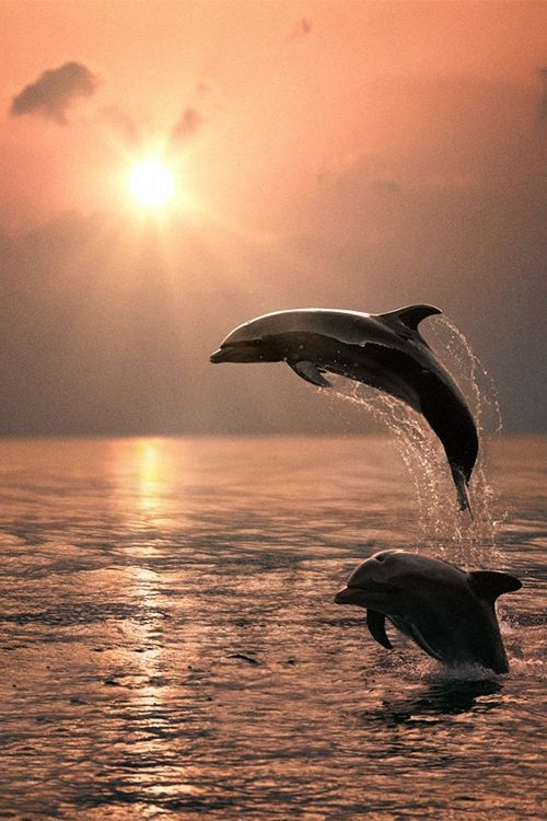 "celestiol: "" dolphins | by Vitaliy Sokol """