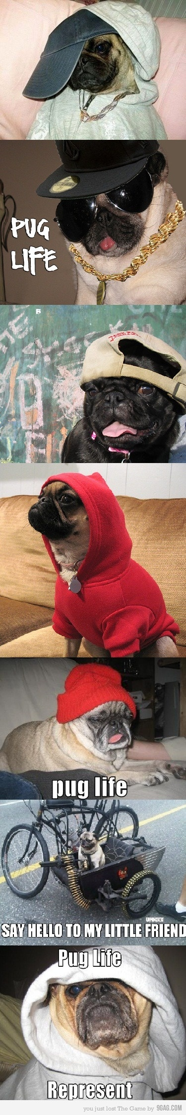 pugs are so bad ass !