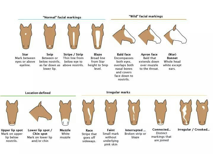 100+ best Animal Anatomy/Dissections/Animal Identification images by ...