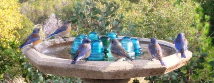 insulator bird bath: Fleamarketgardening Org, Birdbaths, Fleas, Gardening Ideas, Flea Market Gardening, Flea Markets, Amazing Birdbath, Gardening Love, Gardening Gardening