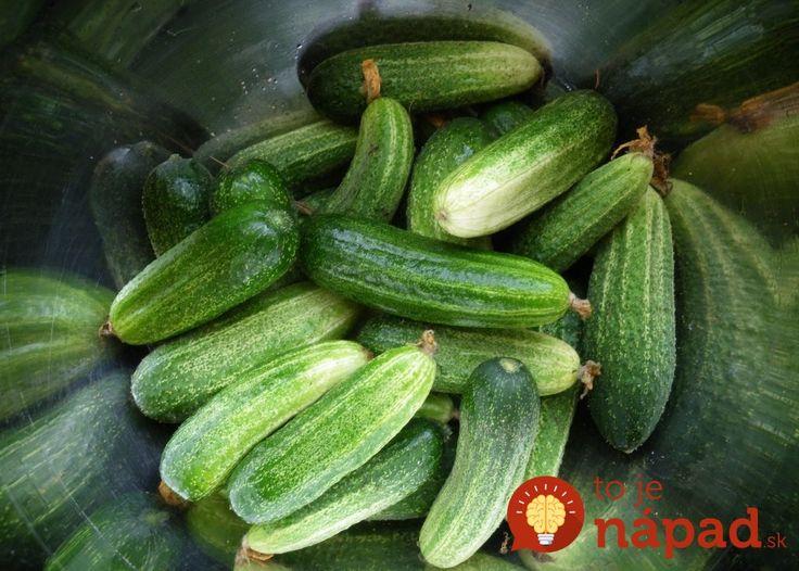 Zozbierali sme vás 6 cenných rád, ktoré skúsení záhradkári považujú za základ pre získanie bohatej úrody uhoriek. Ak ste niektoré doposiaľ nepoznali, môžu sa vám hodiť.