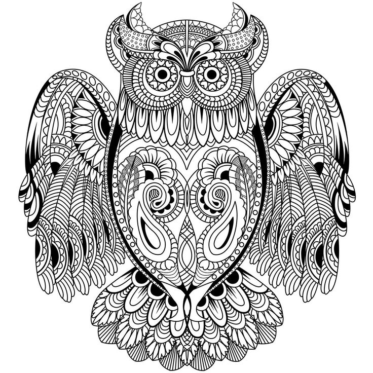 Kaisercolour Coloring Poster 27x19 Owl PagesAdult
