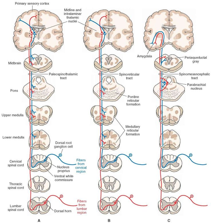 Indirect spinothalamic pathways.
