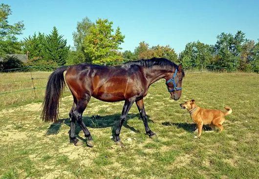 Necesitamos para mantenimiento de finca y animales domésticos (perros y un caballo) persona con experiencia para media jornada de lunes a sábado   https://www.domestiko.com/bolsa-trabajo/empleo/44510/jardinero-y-cuidado-de-animales-domesticos-at-pilar/