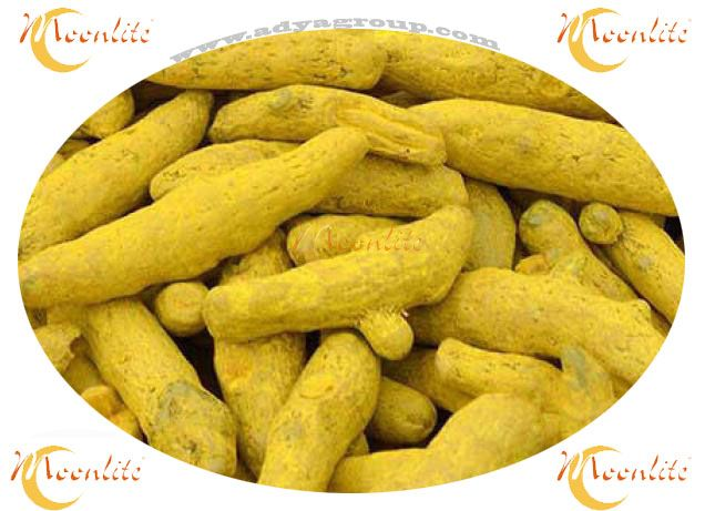 Turmeric Finger / Turmeric Whole Exporters  At Moonlite Food Inc through Adyagroup we are whole Indian Spices Manufacturer and world wide suppliers. Turmeric Finger and Turmeric powder also one of them. Our all these spices are meet best quality standard.   Know more about our this Turmeric Finger :-   https://goo.gl/DPlZ9h