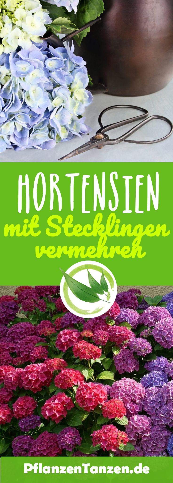 【ᐅ】Hortensien Pflege 2019 – Schneiden, vermehren, überwintern