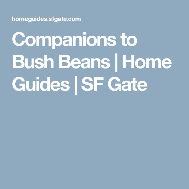 Companions to Bush Beans | Home Guides | SF Gate