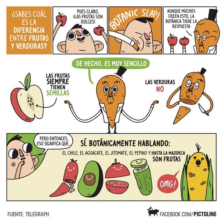 Aprende con #Terra a diferenciar una fruta de una verdura. Visita nuestra página web www.terra.net.co y pregunta por nuestros servicios en el tel: (4) 3860181 #TerraPyJ Imagen vía Pinterest