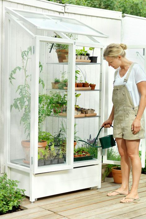 small greenhouse. How cool to convert an old curio cabinet and replace the back with a picture framed piece of glass.