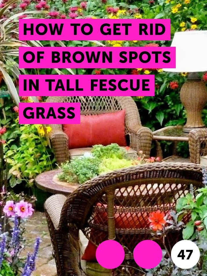 How To Get Rid Of Brown Spots In Tall Fescue Grass With Images Plants Indoor Greenhouse Strawberry Plants