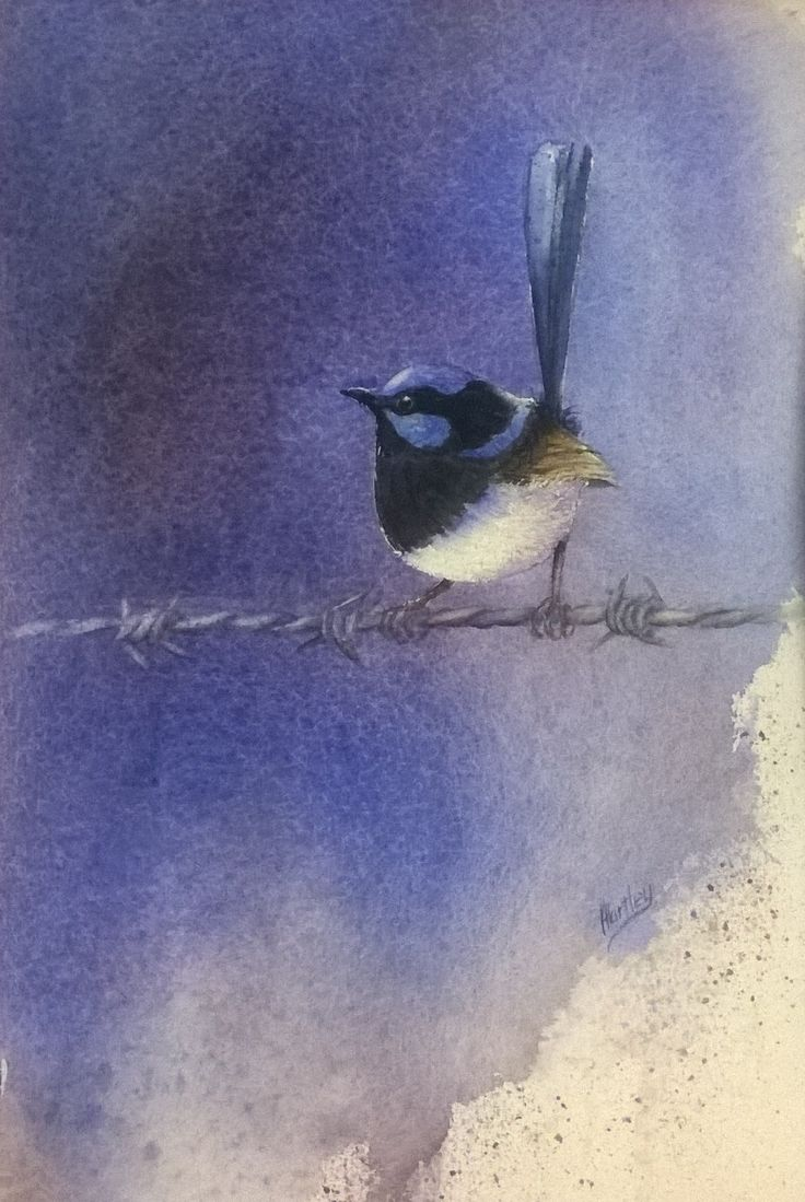 'Wren on a wire' 30x25  2015        FIRST PRIZE