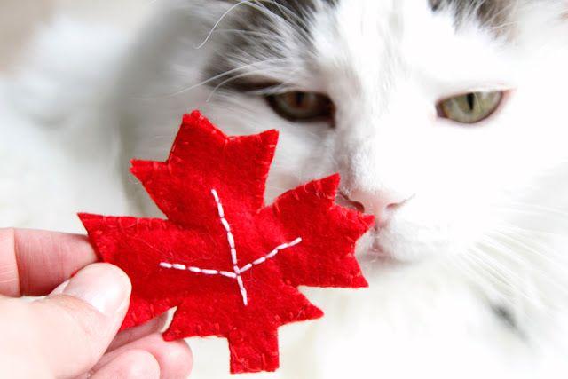 Kitty Cat DIY: Easy Maple Leaf Felt Cat Toy | Canada Day Crafts