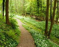 Rocks East Camping offers a fab site with good facilities and plenty of space at Ashwicke near Bath. With woodland walks, camp fires encouraged and Bath only 20 minutes drive away, what are you waiting for?