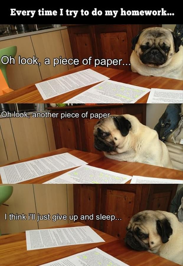 Me doing my homework! Funny Picture Dump Of The Day – 32 Pics