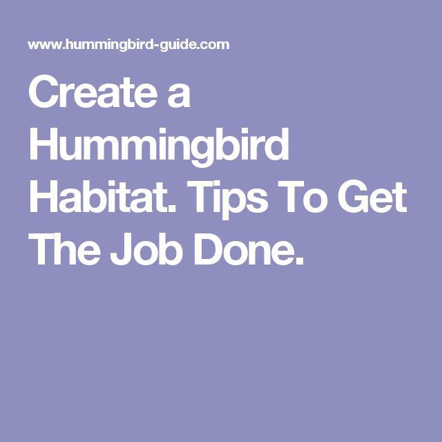 Create a Hummingbird Habitat. Tips To Get The Job Done.