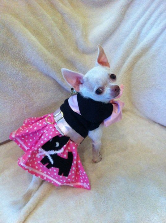 The Pink Chihuahua Skirt  Dog Halloween by DownUnderDogDesigns, $55.00: Minis Daschund, Dogs Skirts, Skirts Dogs, Chihuahua Dogs, Pink Chihuahua, Socks Hop, Chi Baby, Chihuahua Skirts Awwwwww, Dogs Halloween