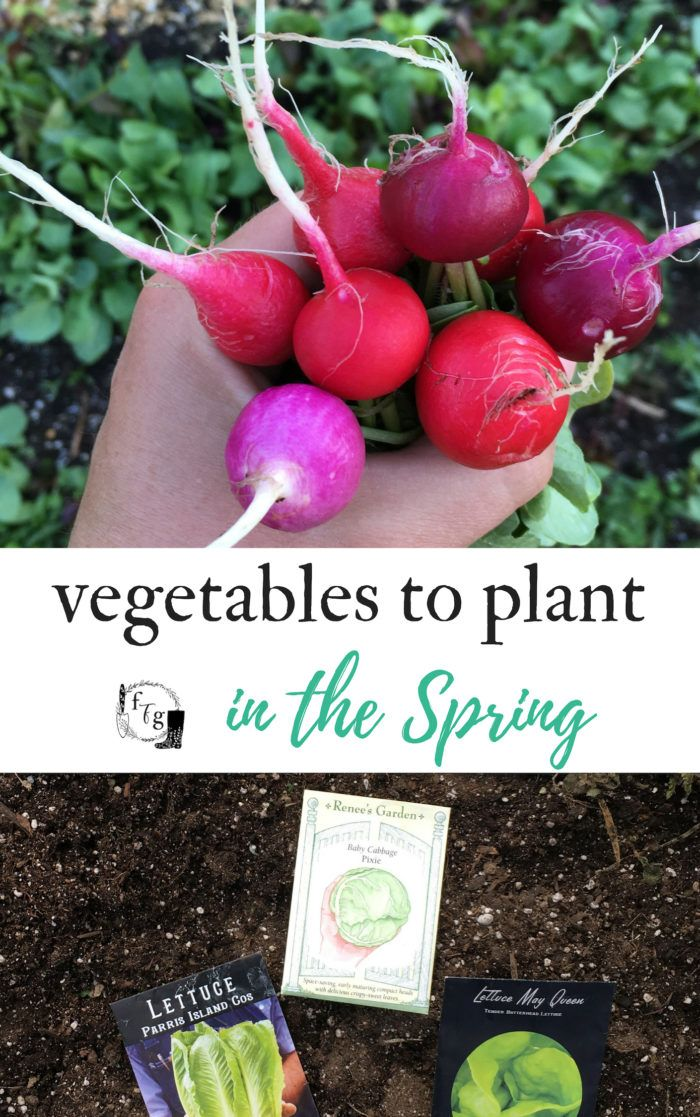 List Of Vegetables To Plant In Spring  Family Food Garden -6404
