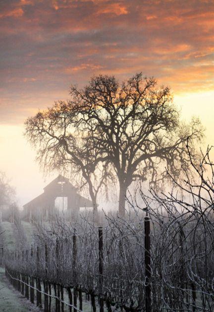 So Pretty..Old Barn In The Fog