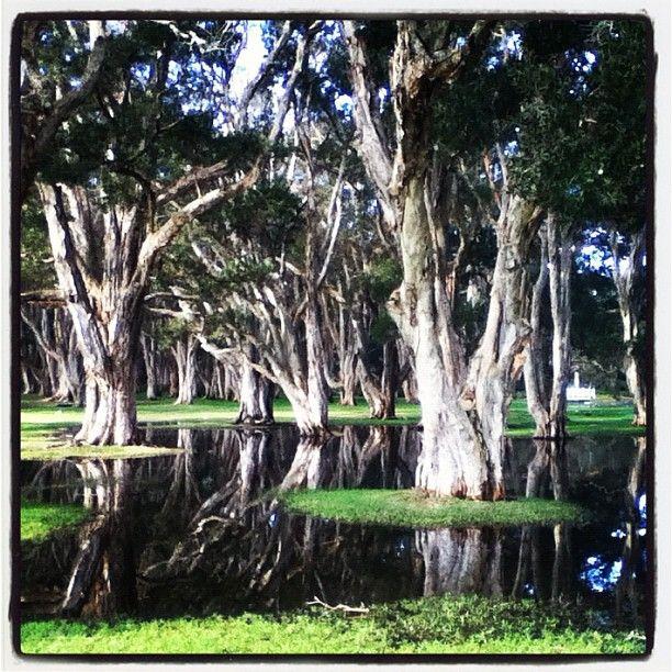 Centennial Park, Sydney Photo by pod1213 • Instagram