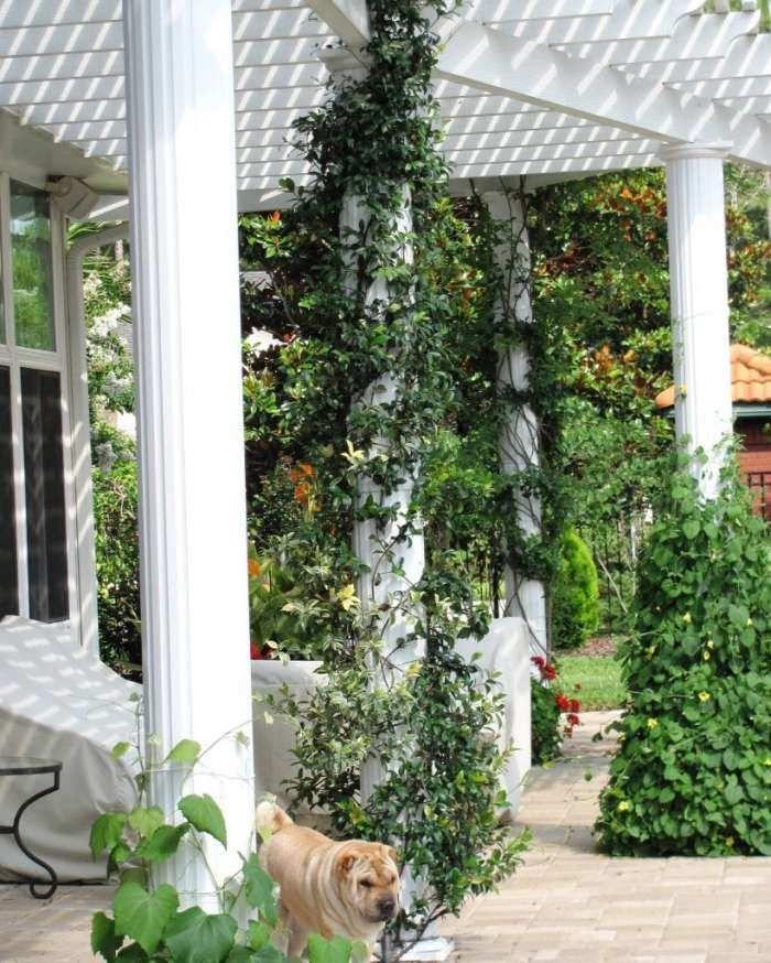 pergola blanche décorée de plantes grimantes vertes