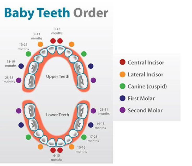 Baby Teeth Order Chart | Baby Teething Chart for each Tooth - https://twitter.com/meghannbrothern/status/723155631042121729
