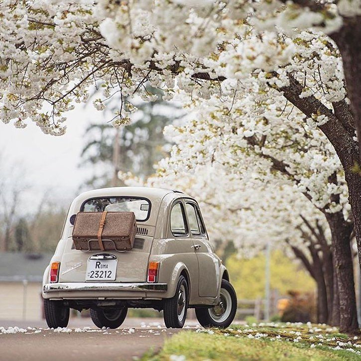 Spring break. FIAT 500  The blossom is out.