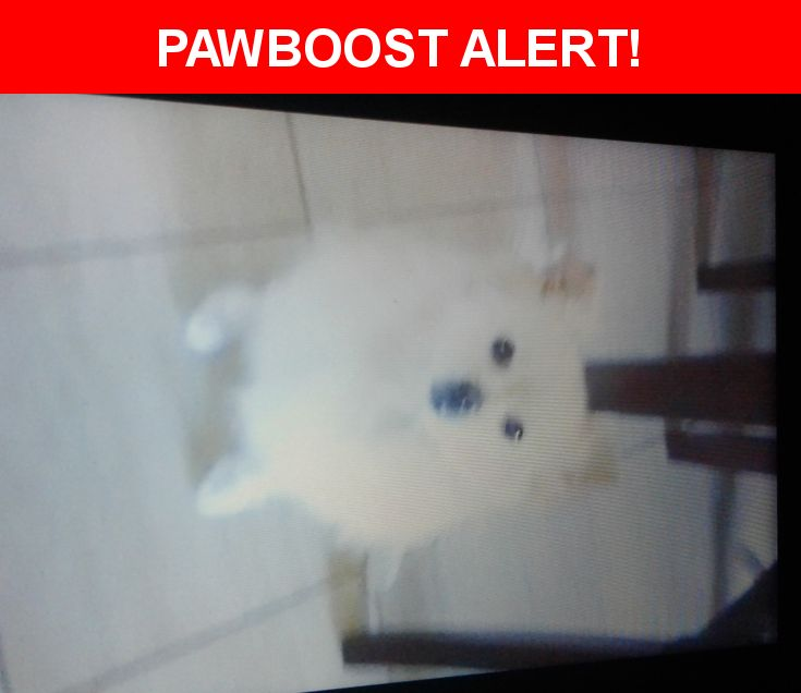 Please spread the word! Chico was last seen in Midway City, CA 92655.  Description: Friendly, tan with white,