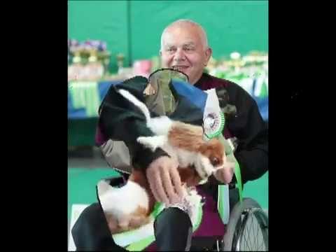 International National Specialty Dog Shows Posusje 30 31st
