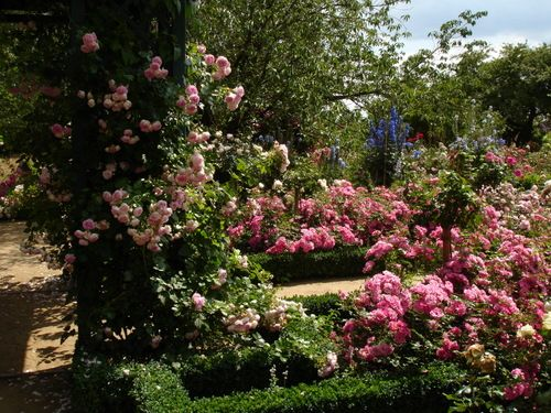 122 best rosen images on Pinterest Roses, Right guy and Roses garden - baldur garten rosen