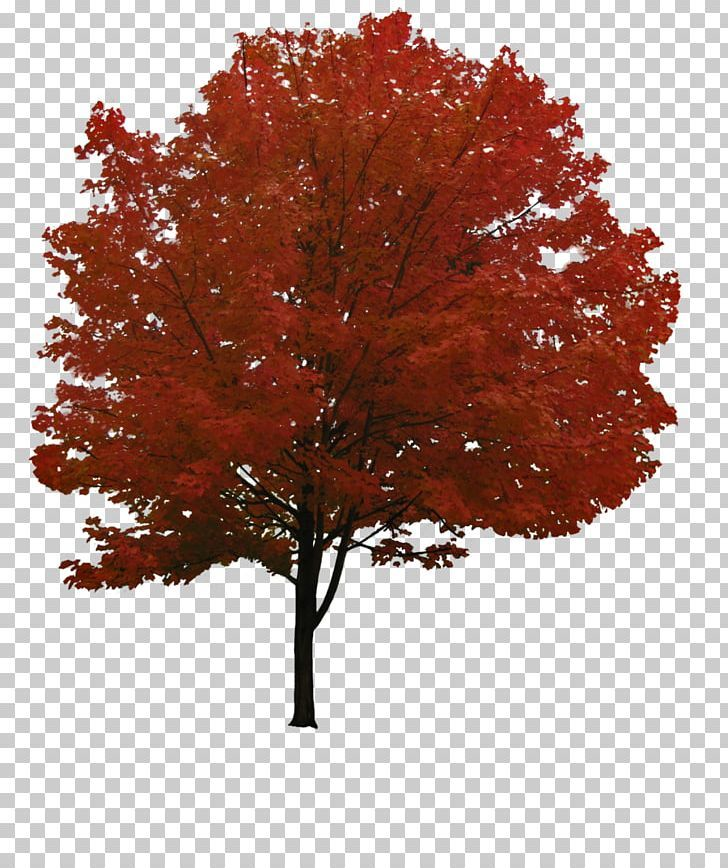 Tree Png Tree Png Tree Photoshop