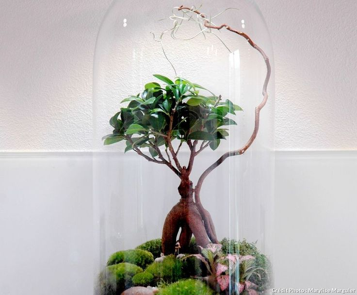 idées pour réaliser un terrarium humide sous un bocal avec un bonsaï, de la mousse