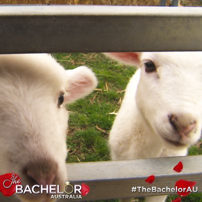 How cute! Get down on the farm here: http://tenplay.com.au/channel-ten/the-bachelor/extra/season-1/down-on-the-farm