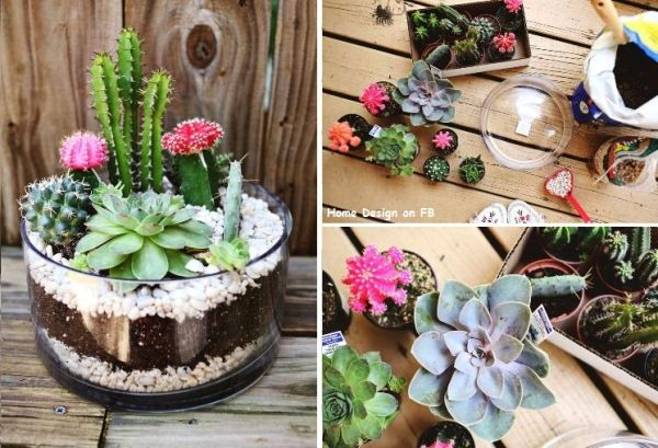 How to make simple cute indoor cactus garden step by step DIY tutorial instructions