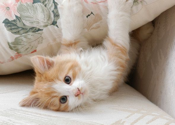 #1 Male Name: Max  This name may be simple to spell and say, but it's perfect for your regal and adventurous kitten. And if your tiny cat is truly a wild thing, it accurately brings to mind the title character in Maurice Sendak's classic Where the Wild Things Are.