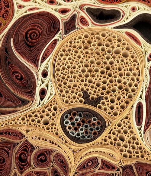 Paper artwork + human anatomy
