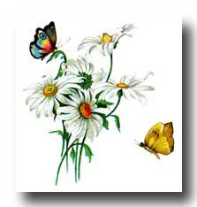 drawings of flowers and butterflies | drawings of butterflies image 6 this way to more butterfly