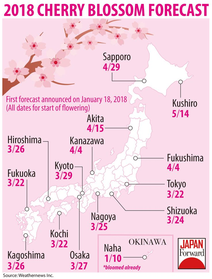 Weather forecasts have begun for Japan's cherry blossom season. Cherry blossoms can be viewed in the Tokyo area starting from March 22, 2018. But the flowers will be appearing much earlier (and later) in other parts of the country.