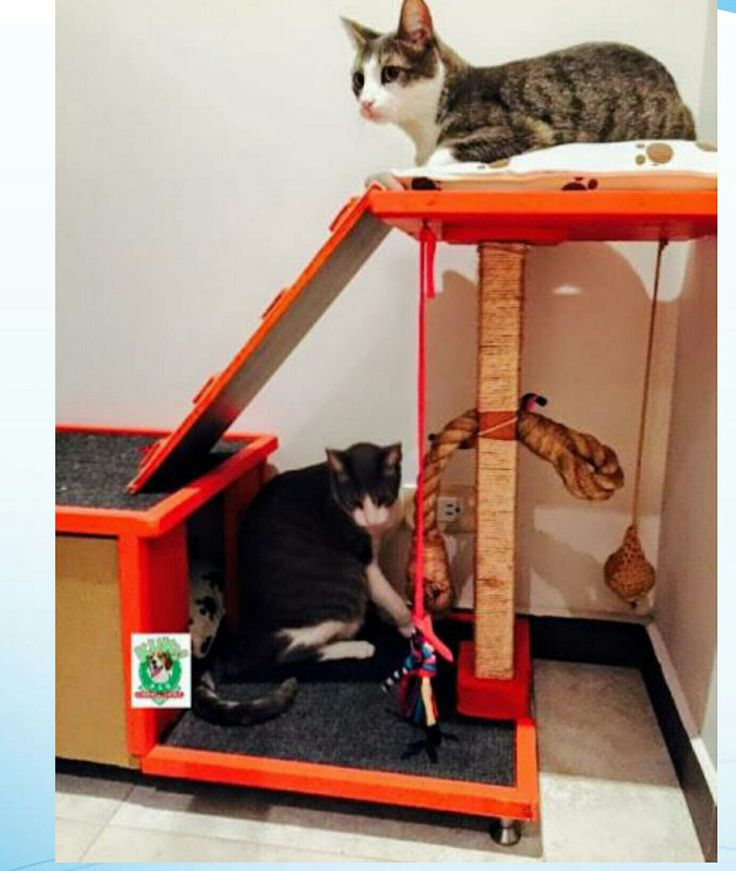 Gimnasio sobre medida. Suministros para mascotas Kuky   – productos