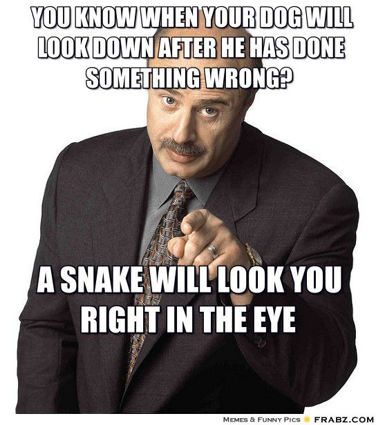 You know when your dog will look down after he has done something wrong? A snake will look you right in the eye. -Dr. Phil